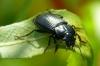 Chrząszcze (coleoptera)